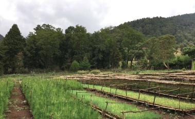 Communities Manage Ethiopia's Forests to Improve Livelihoods, Resilience, and Shared Benefits