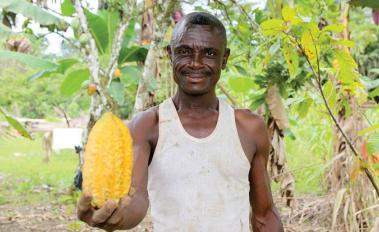 Cutting deforestation out of the cocoa supply chain