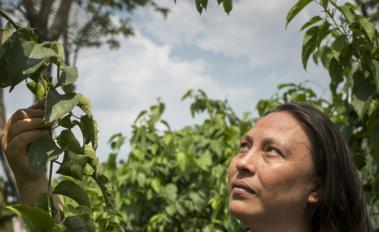 Unlocking nature-based economies: how to crack the nut in Colombia