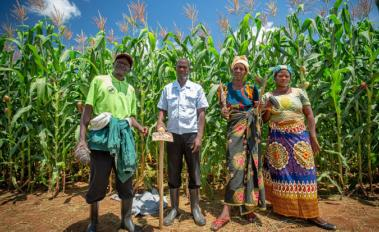 Zambian Farmers at Field School Reap Benefits of Climate-Smart Agriculture​