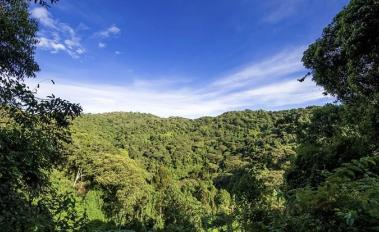 COP19: New Public-Private Forest Protection Initiative Receives $280m Pledge from Norway, UK, and US