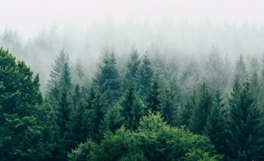 Norway, UK and USA Come Together to Pledge Approximately $280 Million to Sustain the World's Forests