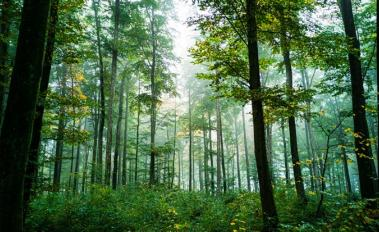Statement from the Governments of Germany, Norway, UK and Northern Ireland: Unlocking the Potential of Forests and Land Use