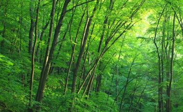 U.S. to Join New $280M Forest Protection Fund