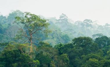To Save Forests, Think Beyond the Trees